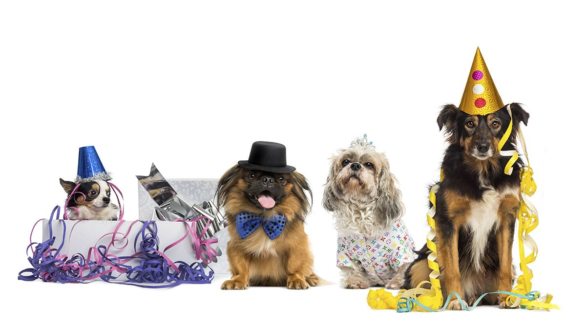iStock 000047093832 web Dogs, Pets movie, Pet news