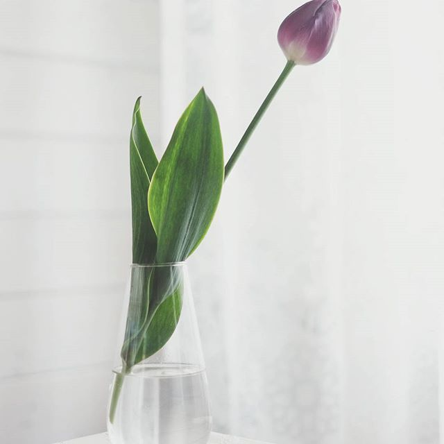 Solo | Still Dacha Life  •  •  •  #nature_perfection #natureaddict #nature #naturesbeauty #nature_obsession #visualoflife #stilllifephotography #dailydoseofcolor #vase #flowers #stilllife #gentle #garden #luminous #calm #floral_perfection #floral  #tulip #solitude #solo