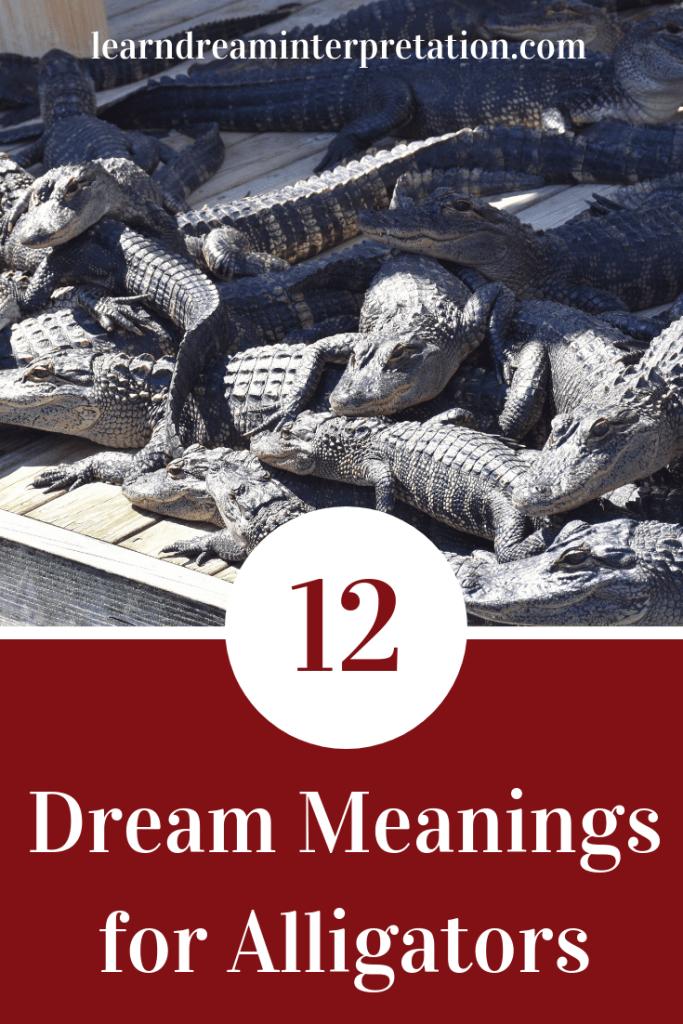 0c482806b6 Twelve Dream Meanings for Alligators