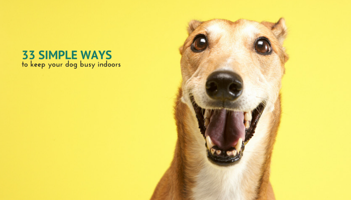 33 Simple Ways to Keep Your Dog Busy Inside
