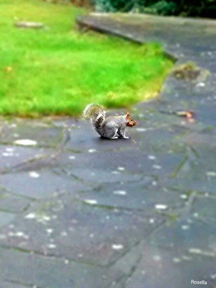: Squirrel