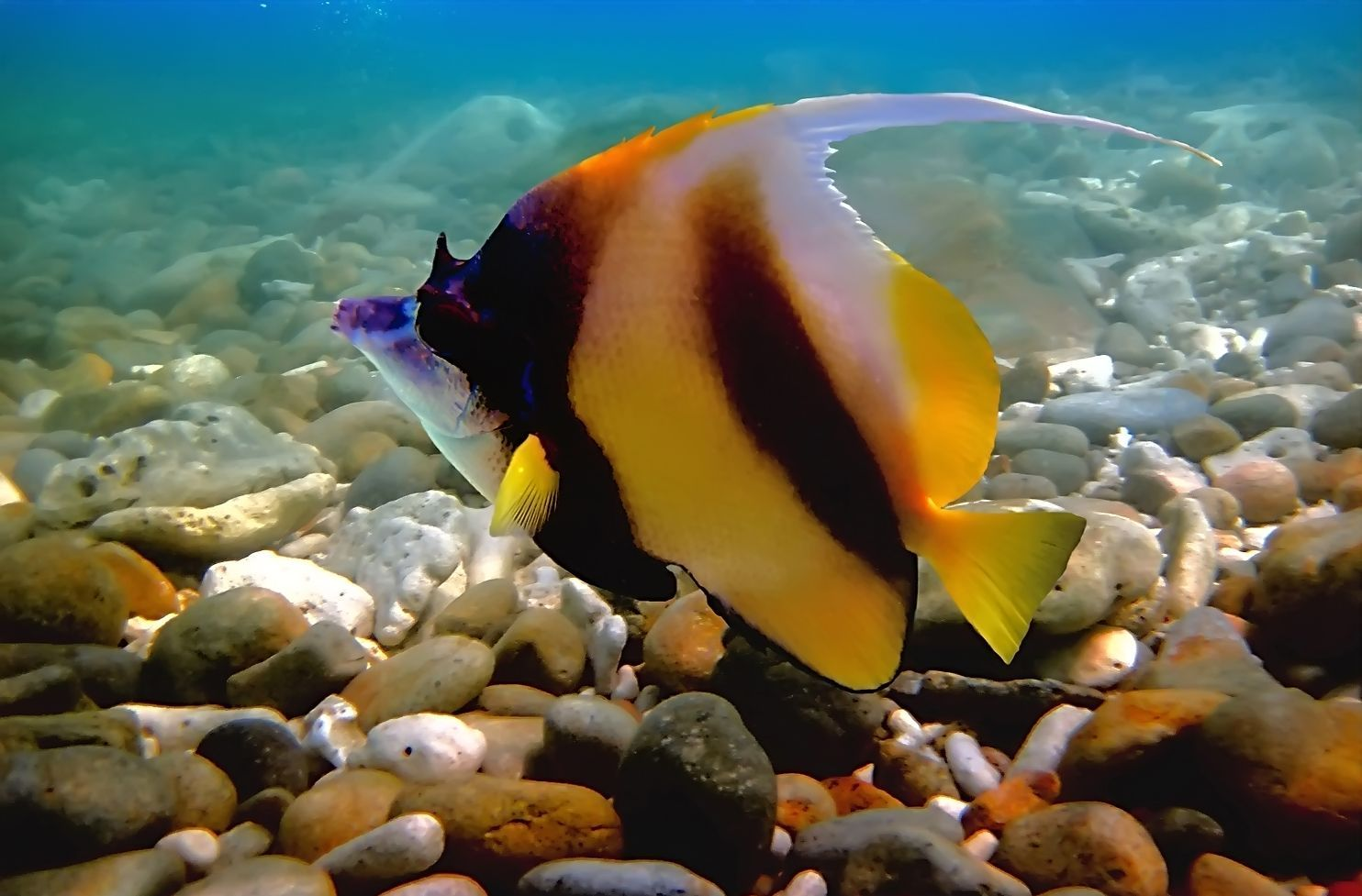 fotografías-del-fondo-marino-peces-de-colores-arrecifes-y-corales-en ...