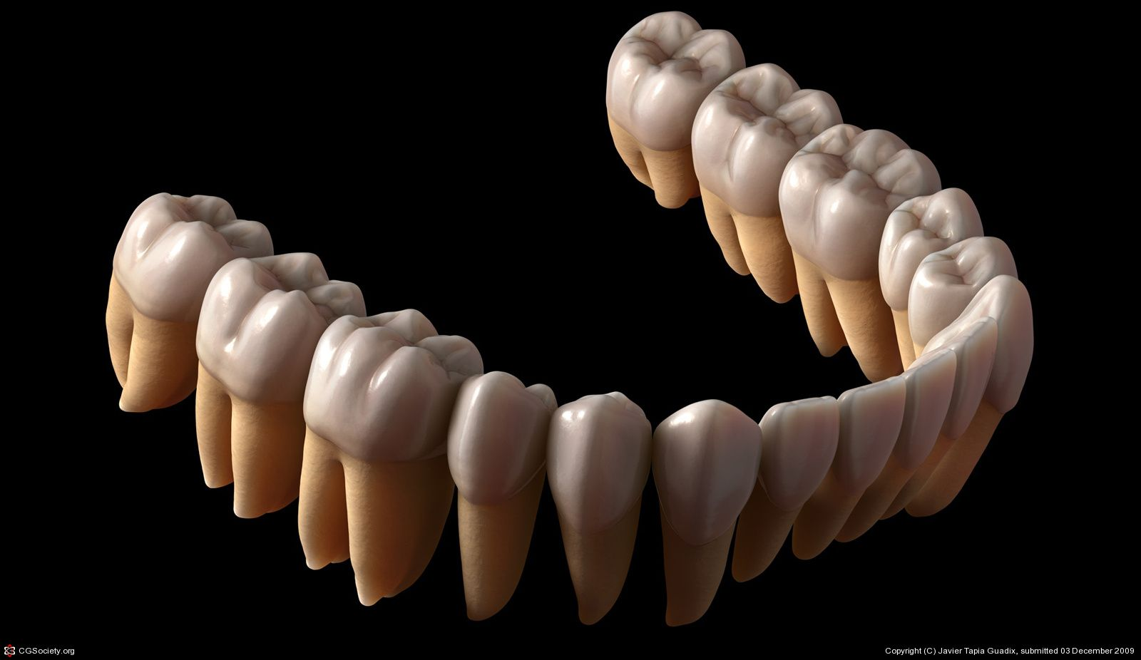 Lower Teeth by Javier Tapia Guadix   3D   CGSociety   teeth   Pinterest