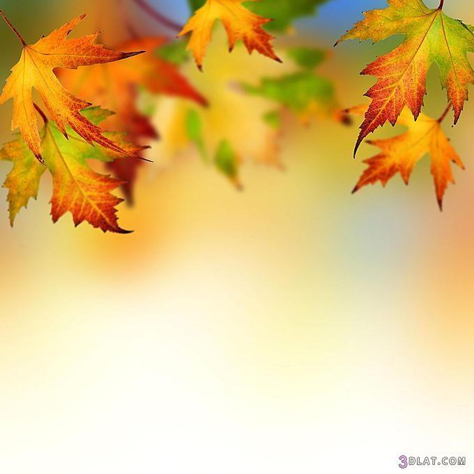 صور خلفيات بوربوينت روعه خلفيات ورود ورسومات جميلة Autumn Leaves Background Borders For Paper Fall Borders