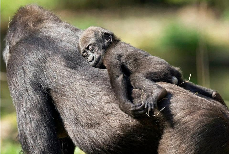 Peaceful Rest By Adam Gore Cute Animals Cute Baby Animals Photos Of Cute Babies
