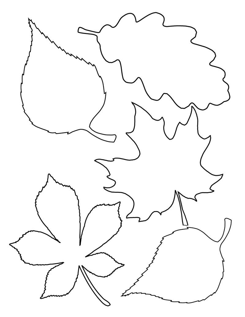 Coloring Pages Of Leaf Shapes