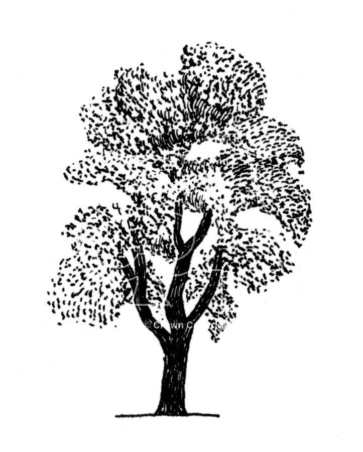 simple tree line drawing with stippling effect for leaves