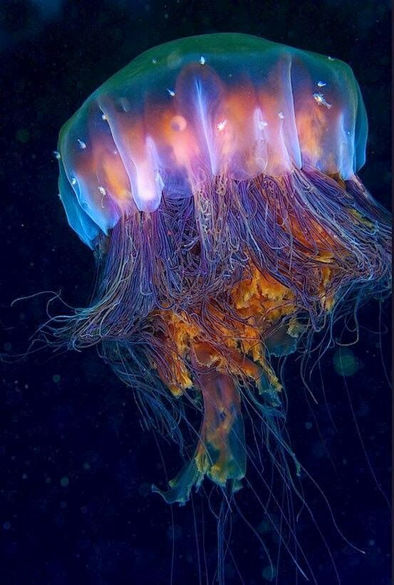 What do jellyfish eat do have brains and all types of it for What kind of fish do i have