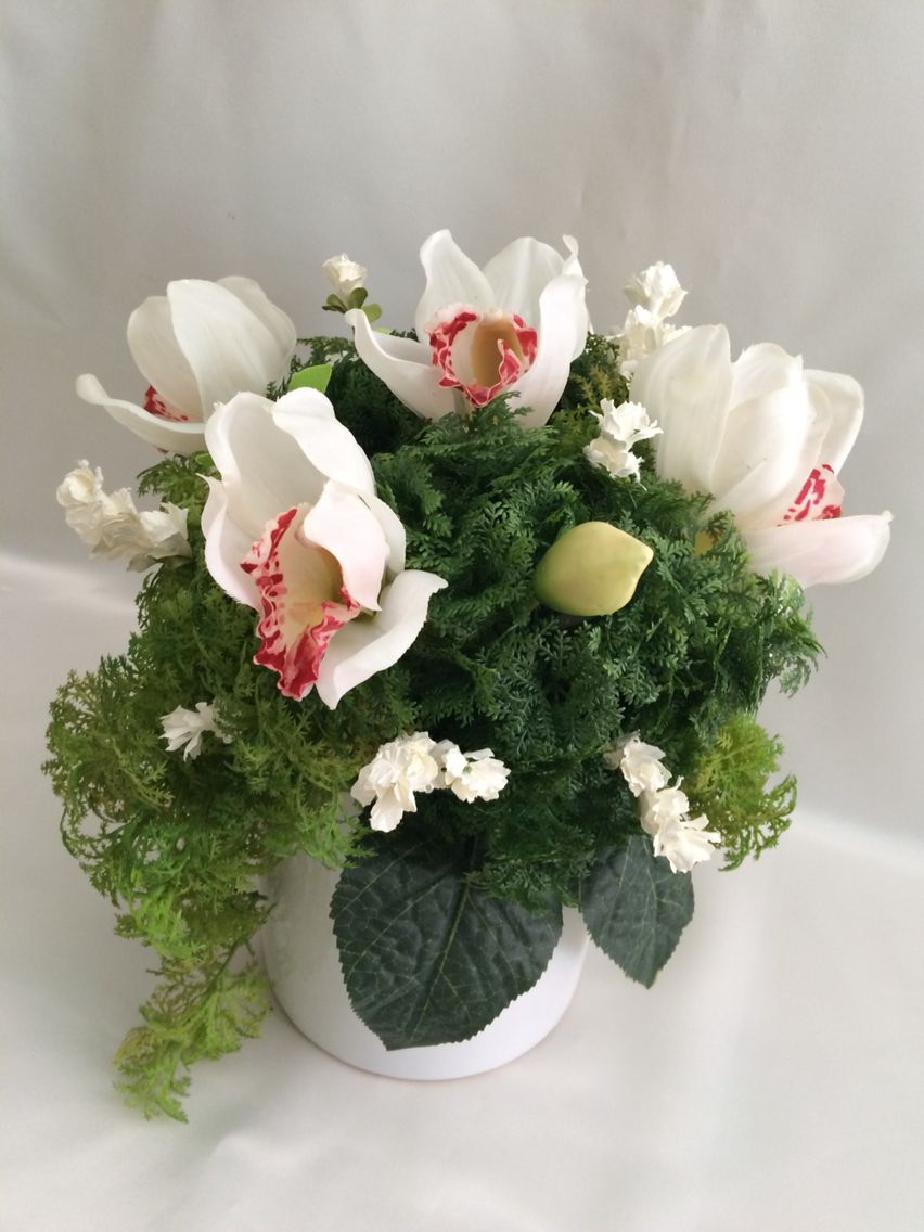 White cymbidium orchid with fern in a pot myriad blosssoms