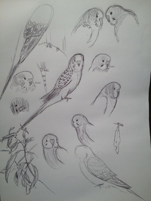 Art Sketch Bird Drawing