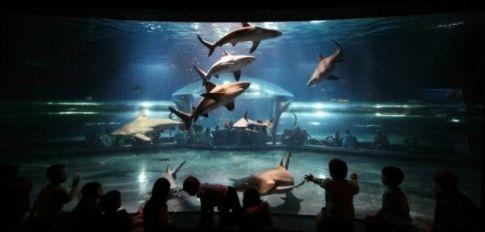 Oklahoma Aquarium | TravelOK.com - Oklahoma's Official ...