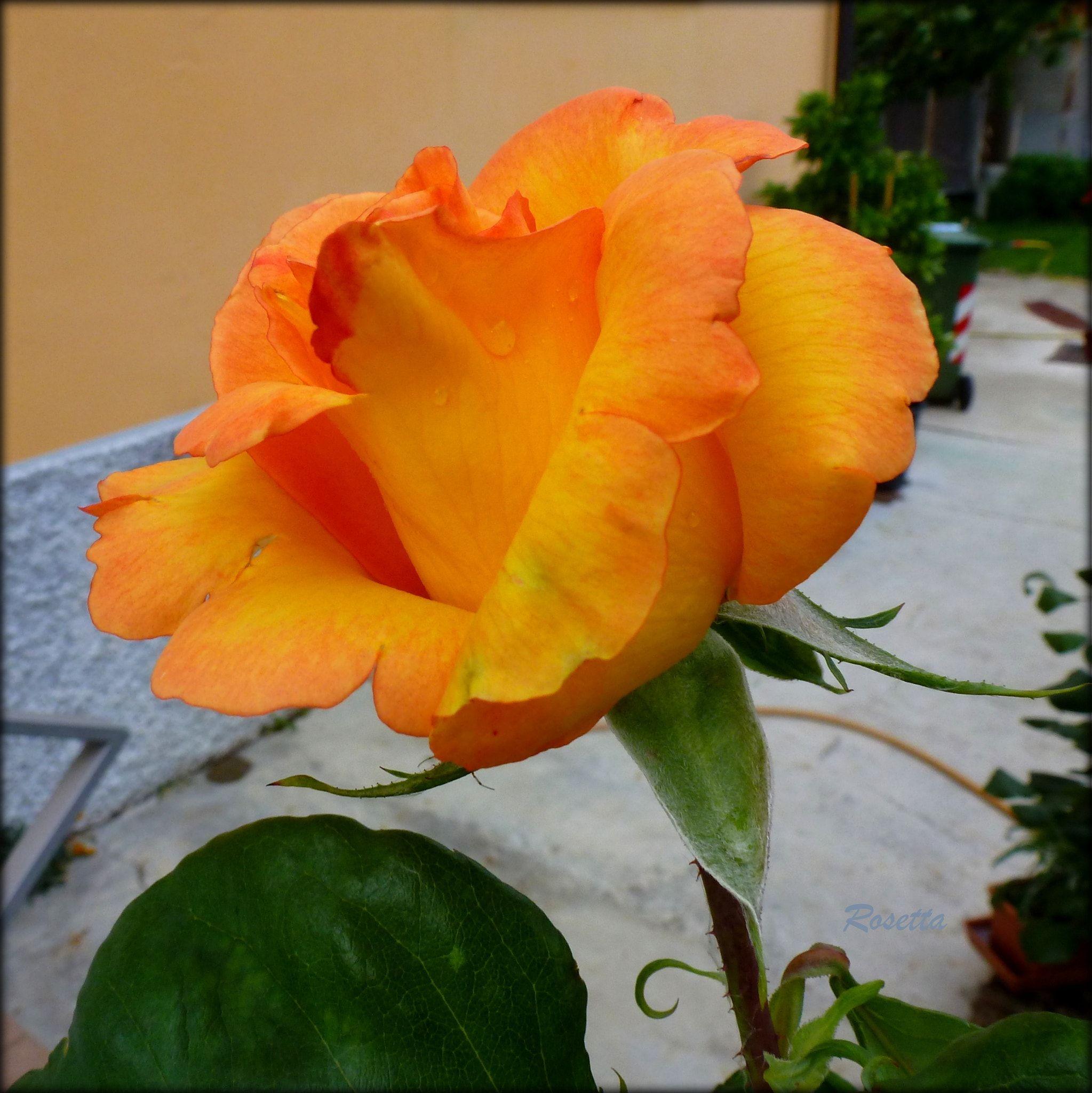 450d2b72ad051ee0ee78d0b3d41a7078 Luxe De Fleurs De Jardin Des Idées