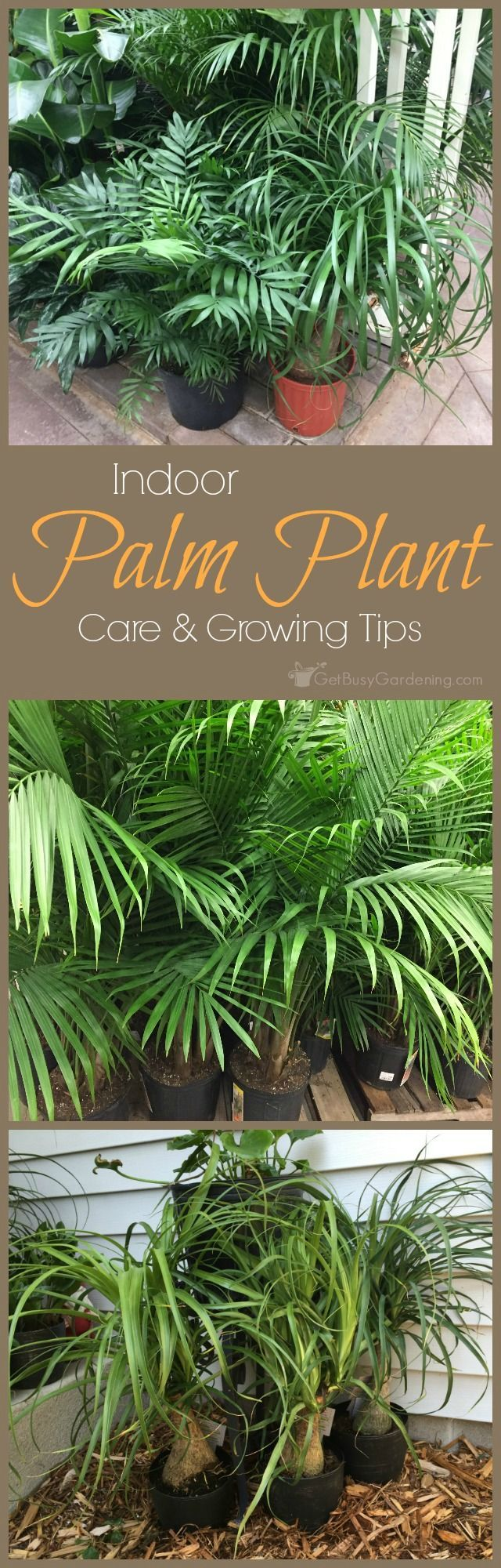 Indoor Palm Plants | Get Busy Gardening