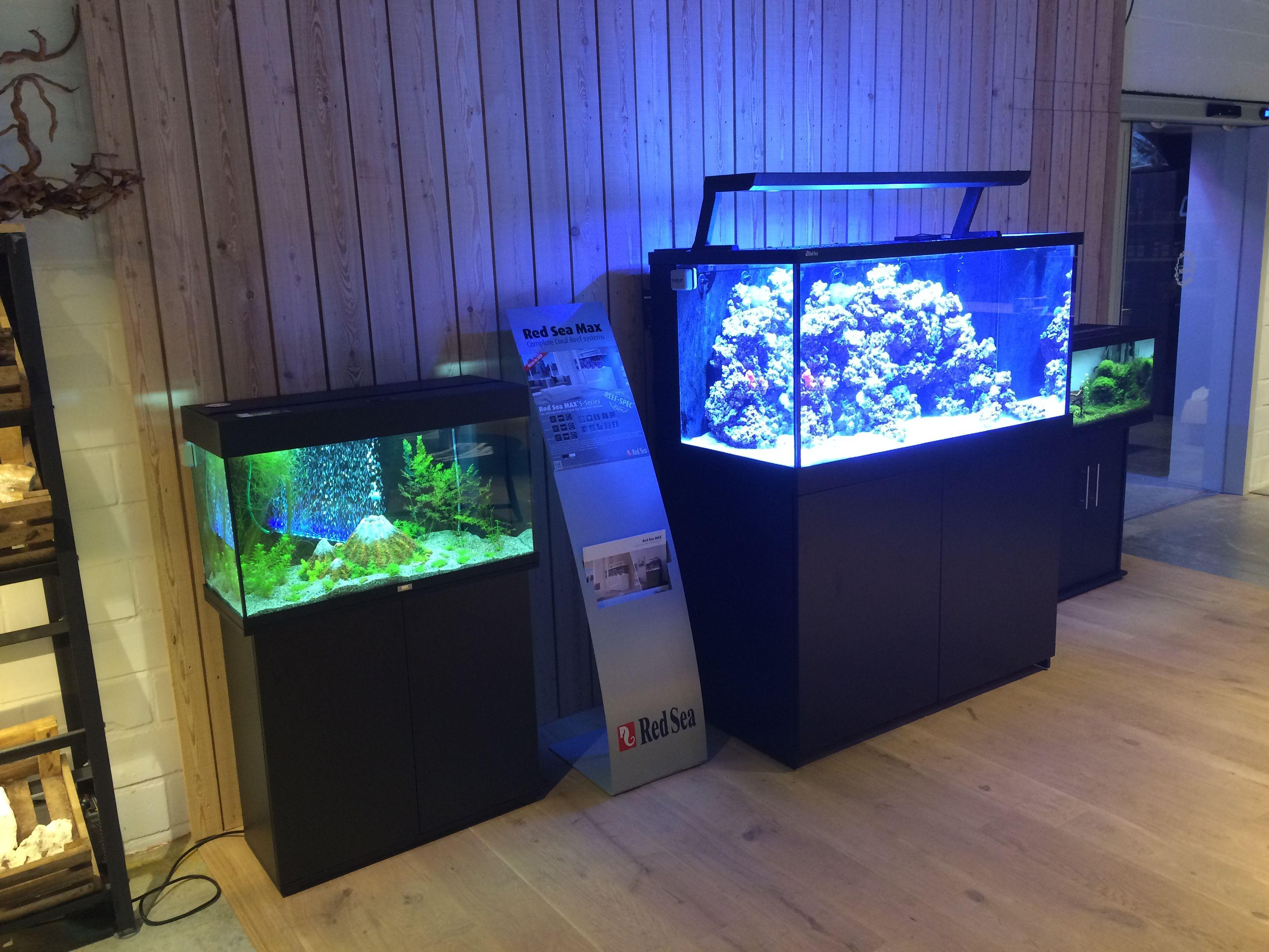 450dc81c81900cee95985760213cb2e1 Frais De Aquarium original Des Idées