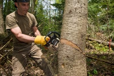 Advanced Tree Felling Techniques | ehow | Tree cutting service, Tree