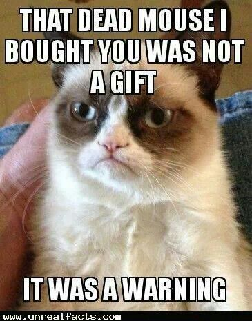 A warning from Grumpy Cat