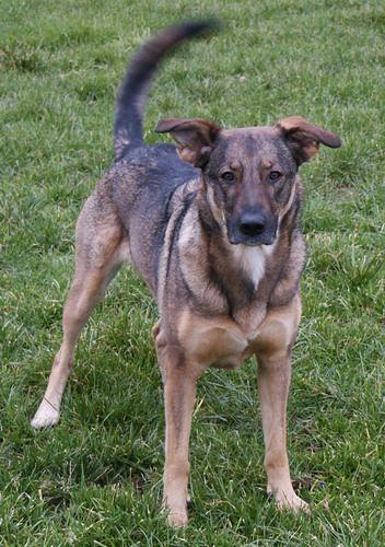 MischlingsFotoDomino Mutt dog, Dog crossbreeds, Mixed
