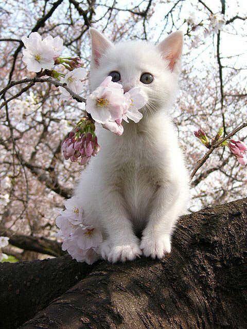 Pin von Ayumi auf かわいい Tiere, Baby katzen, Süße katzen