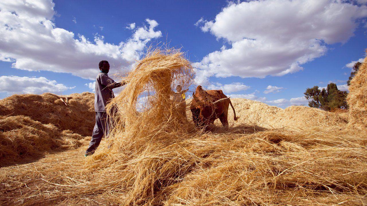 Pin on Feeding Farming