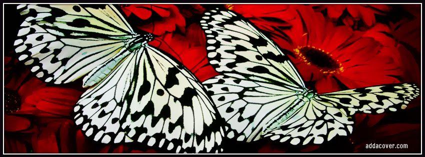 صور خلفيات فيسبوك فراشات جميلة 2012 صور خلفيات بناتيه رائعة للفيسبوك جديدة صور غلاف فيسبوك 2015 Timeline Facebook Beautiful Creatures Creatures Butterfly