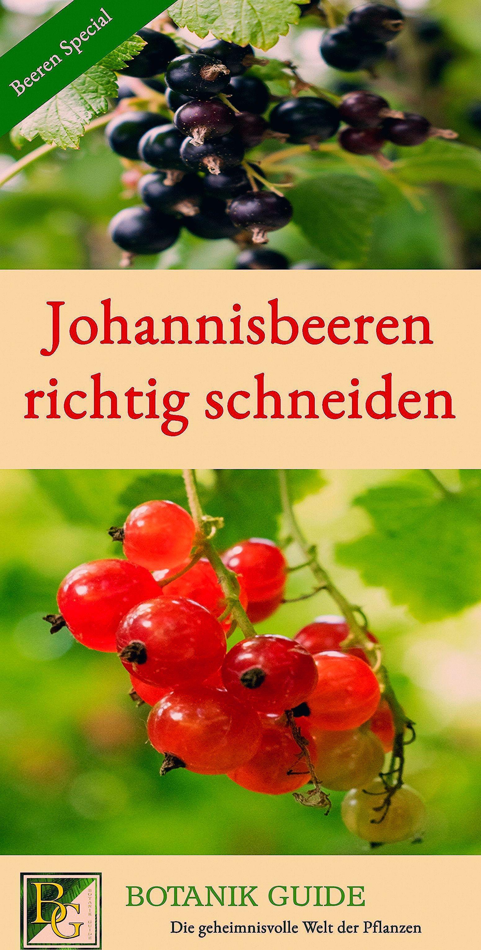 Photo of Üppige Johannisbeer-Ernte mit dem richtigen Schnitt