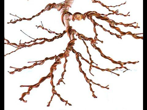 Astounding How To Wire A Bonsai Tree Bonsai Wiring Tips Easy Way To Wire Wiring Cloud Nuvitbieswglorg