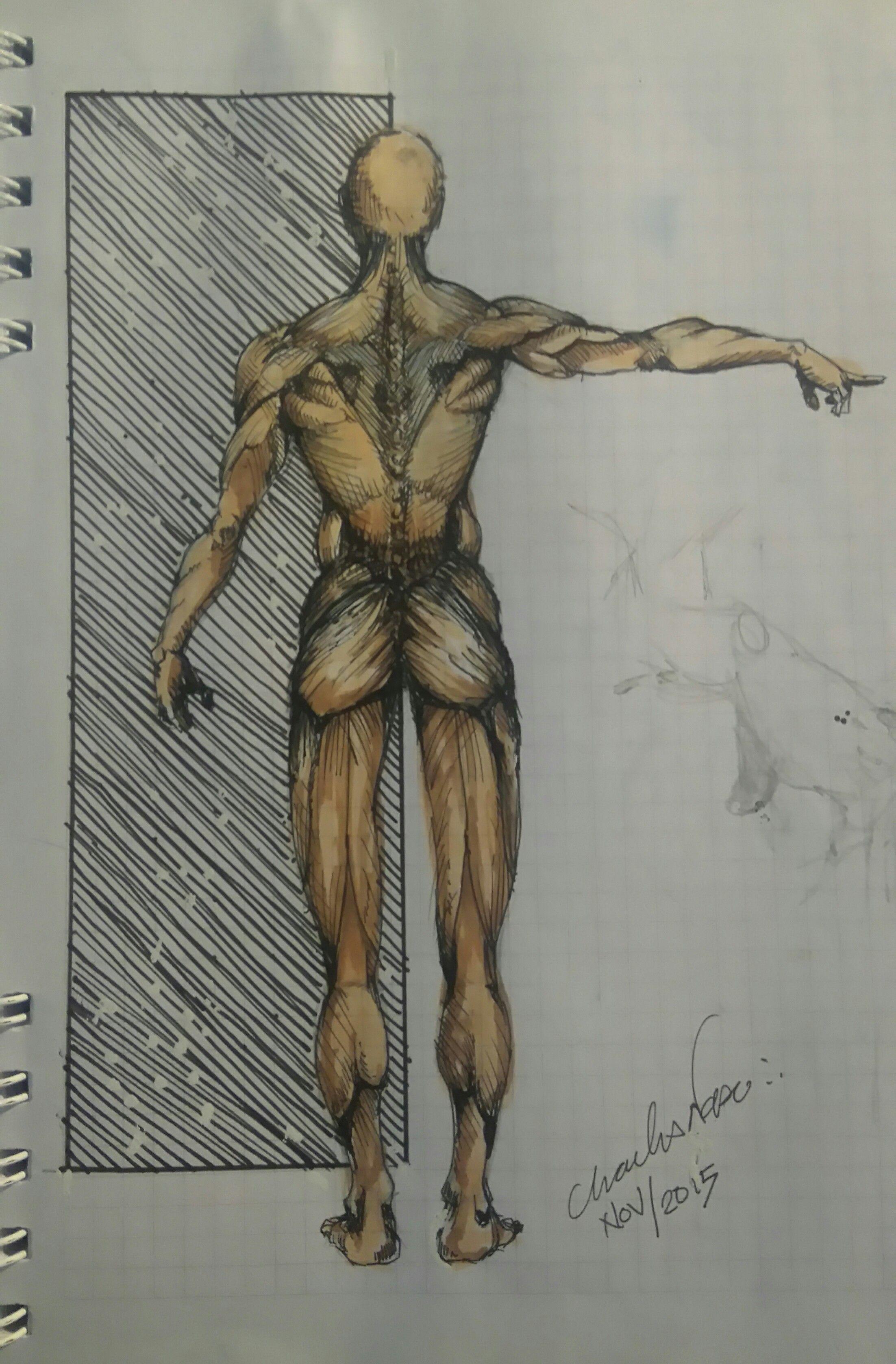 Study of anatomy   Desenhos - Drawings - Studies   Pinterest ...