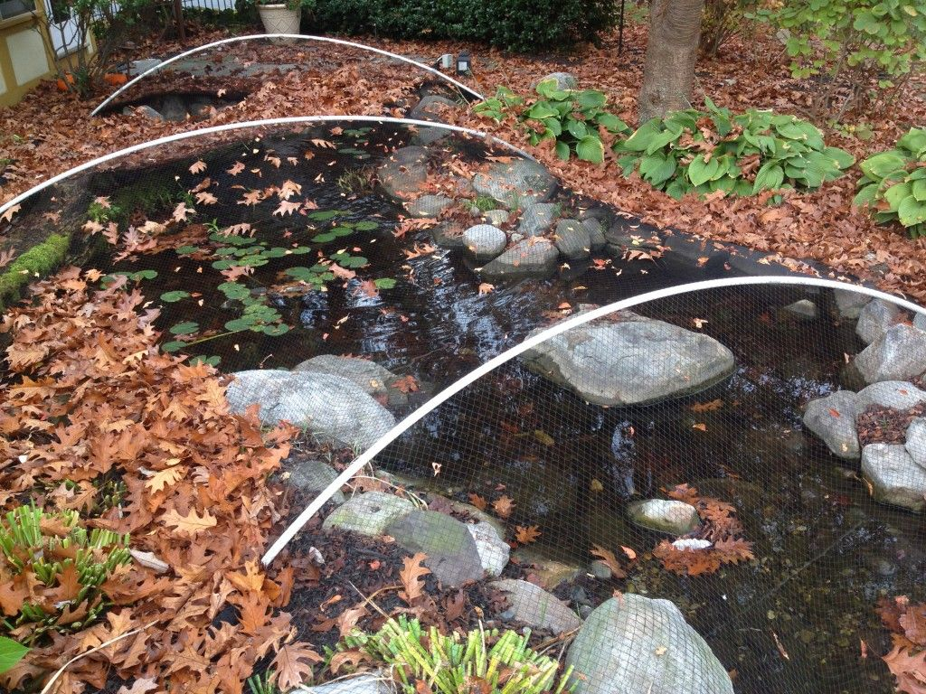 Leaves In Your Pond Backyard Water Feature Spring Lawn Care Pond Netting