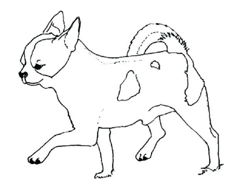 Chihuahua Dog Coloring Pages Coloring Pages For Kids Dog