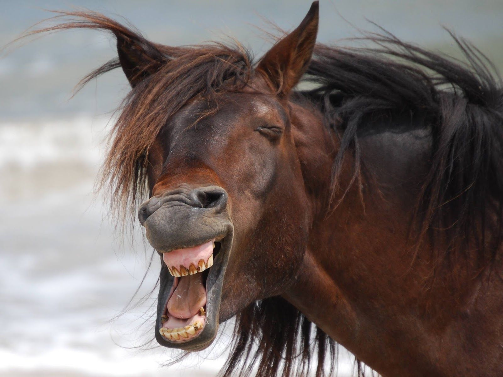 Cavalo sorrindo