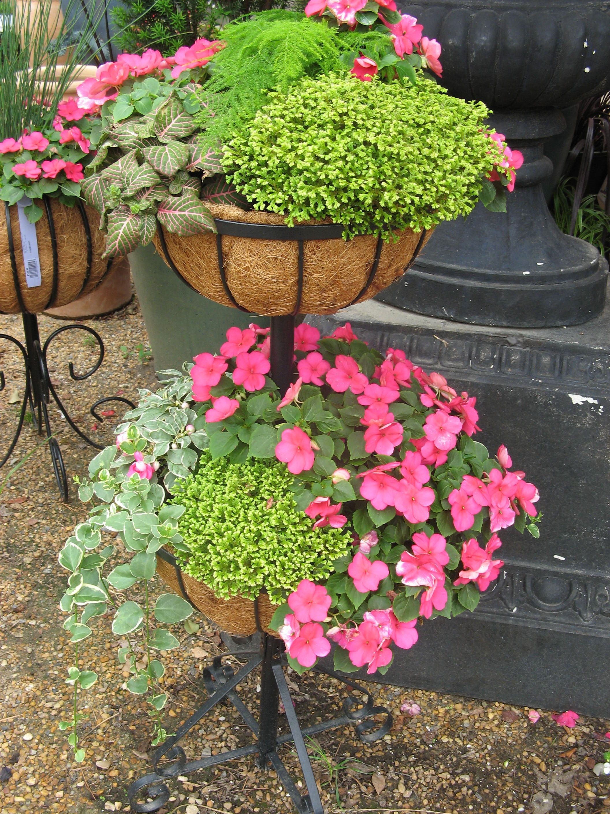 Shade Combo Planters With Impatiens Moss Asparagus Fern Fittonia And Variegated Vina Major Container Flowers Container Plants Asparagus Fern