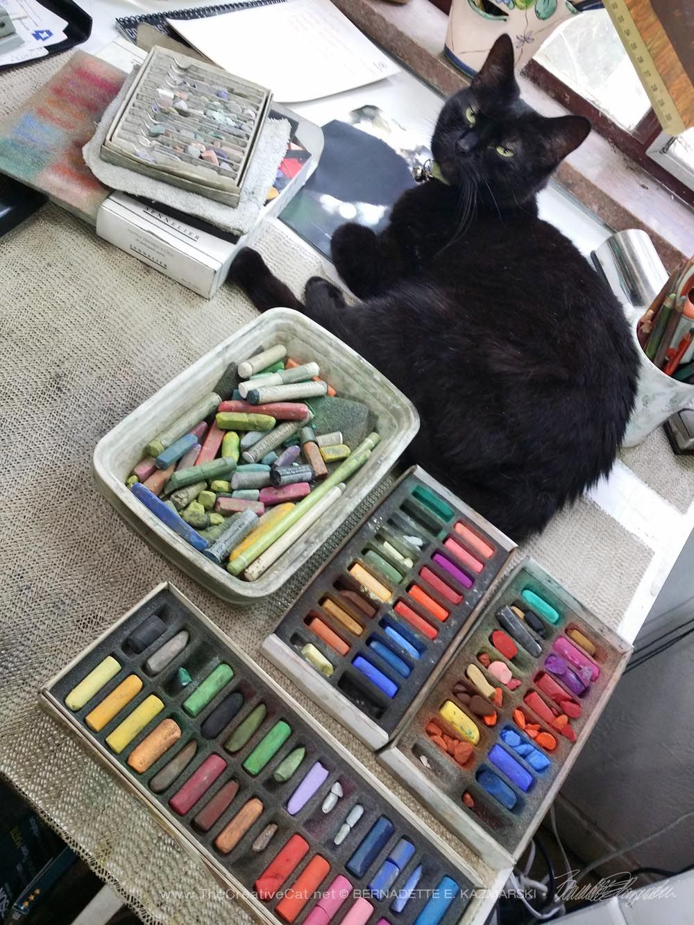 The Creative Cat - Daily Photo: Color Consultant