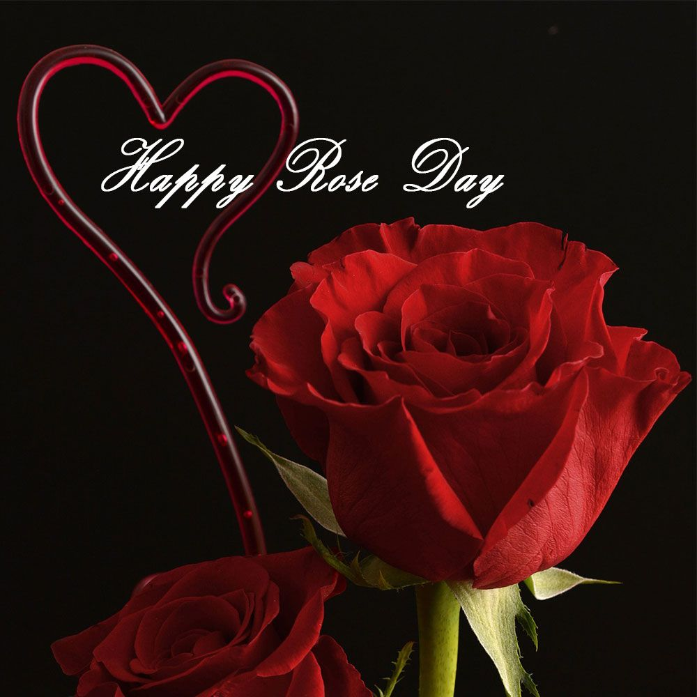 Happy Rose Day Images Photos Pictures Pics Hd Wallpapers Free Download Valentines Day 2020 Images Photos Happy Rose Day Wallpaper Rose Day Wallpaper Rose