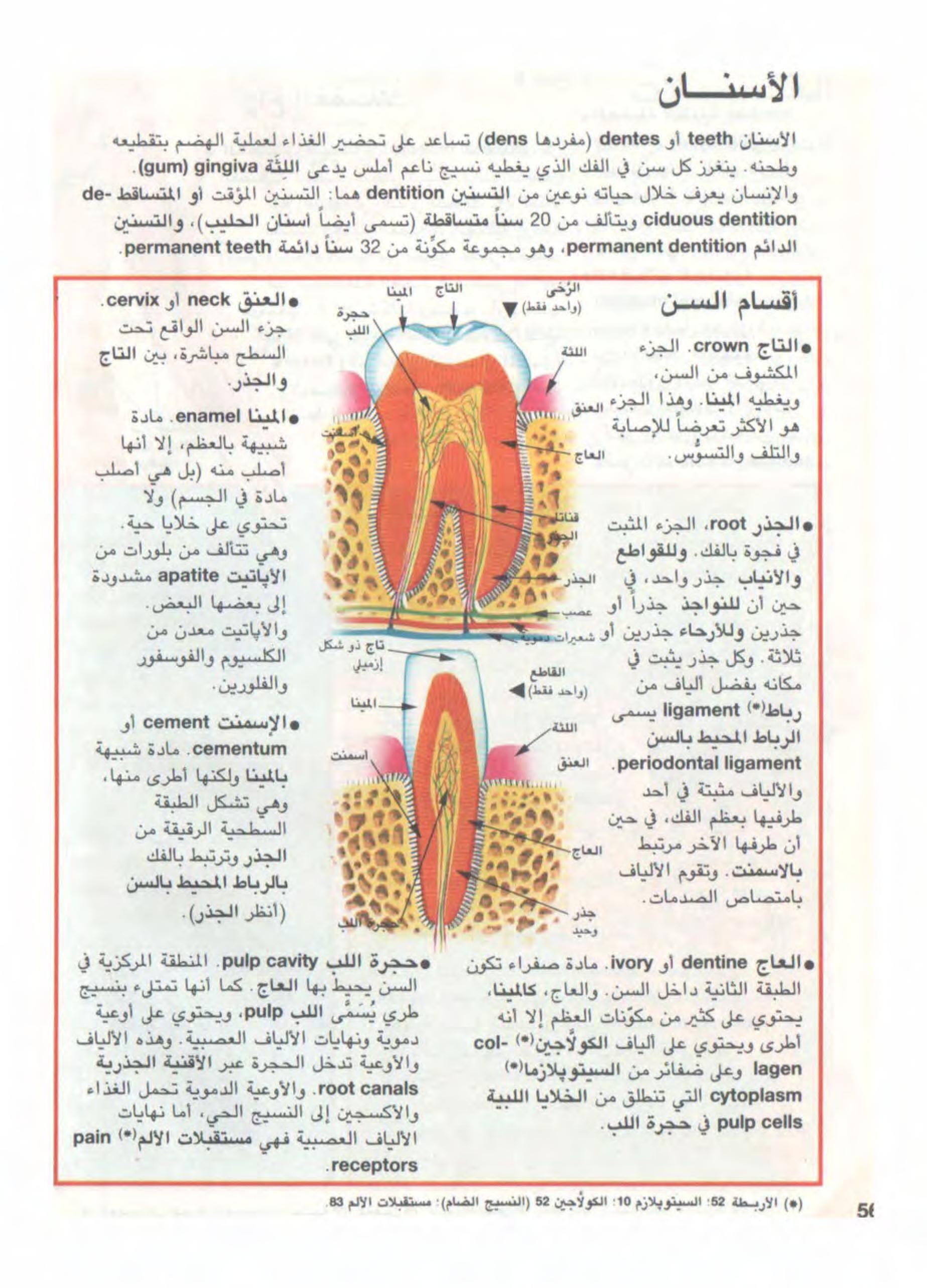 معجم البيولوجيا المصور Free Download Borrow And Streaming Internet Archive Arabic Books Internet Archive Books