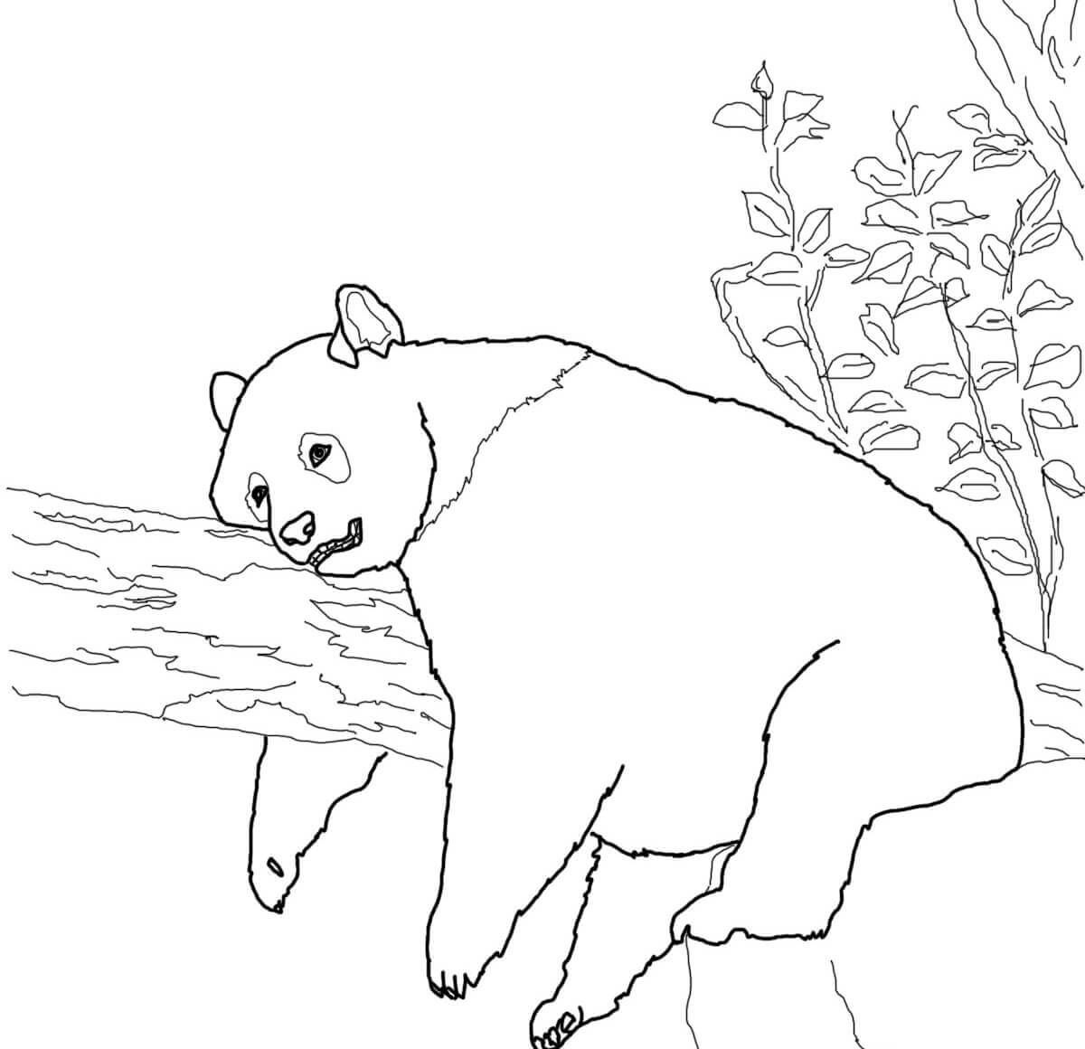 Cute Panda Coloring Pages Freecoloring Pages
