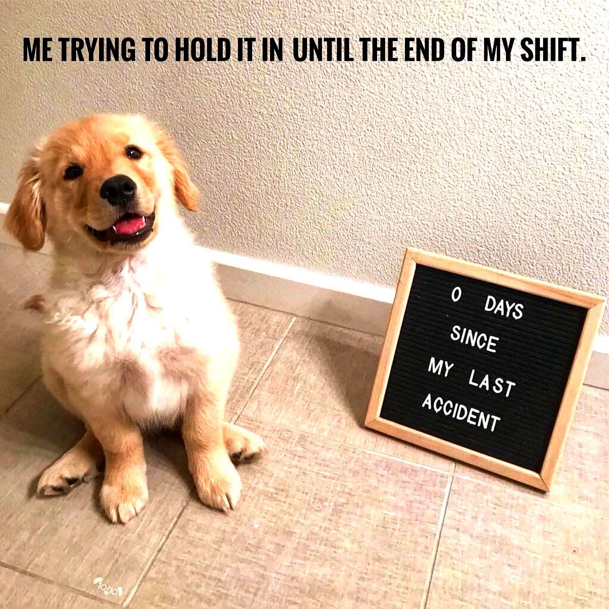 Bahahahaha Dog Memes So Funny Dog Meme Disappointed Funny Dog Memes Cute Dog Memes Dog Memes