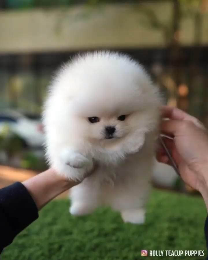Rate The Cuteness Of This Little Puppy Read Description Video In 2020 Cute Animals Cute Baby Dogs Cute Baby Animals