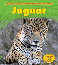 Books About Jaguars  She Talks And Draws Jaguars All Day!