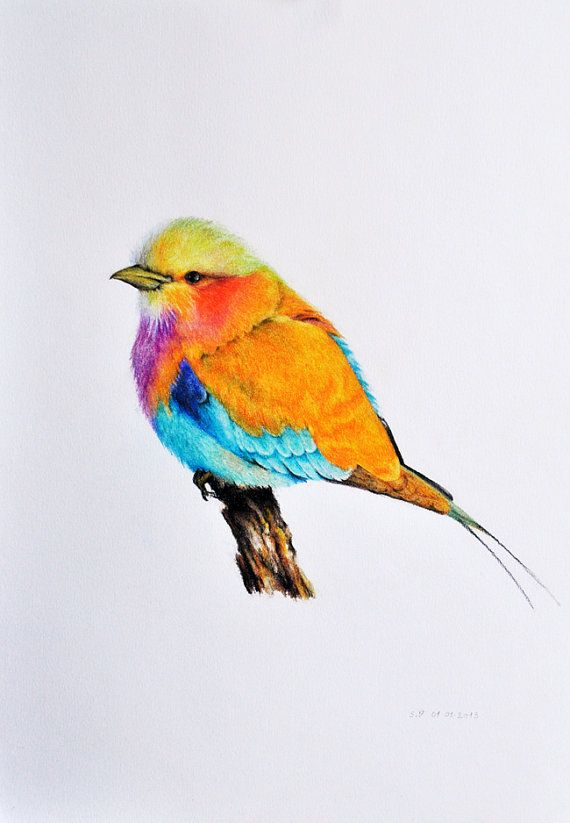Exotic Bird 2 Original Colored Pencil Drawing By Prismaticart