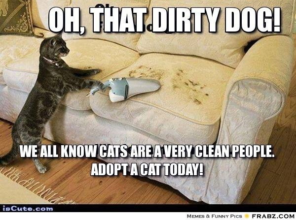 Really Funny Memes Dirty : Yes cats are very clean people j lol funny