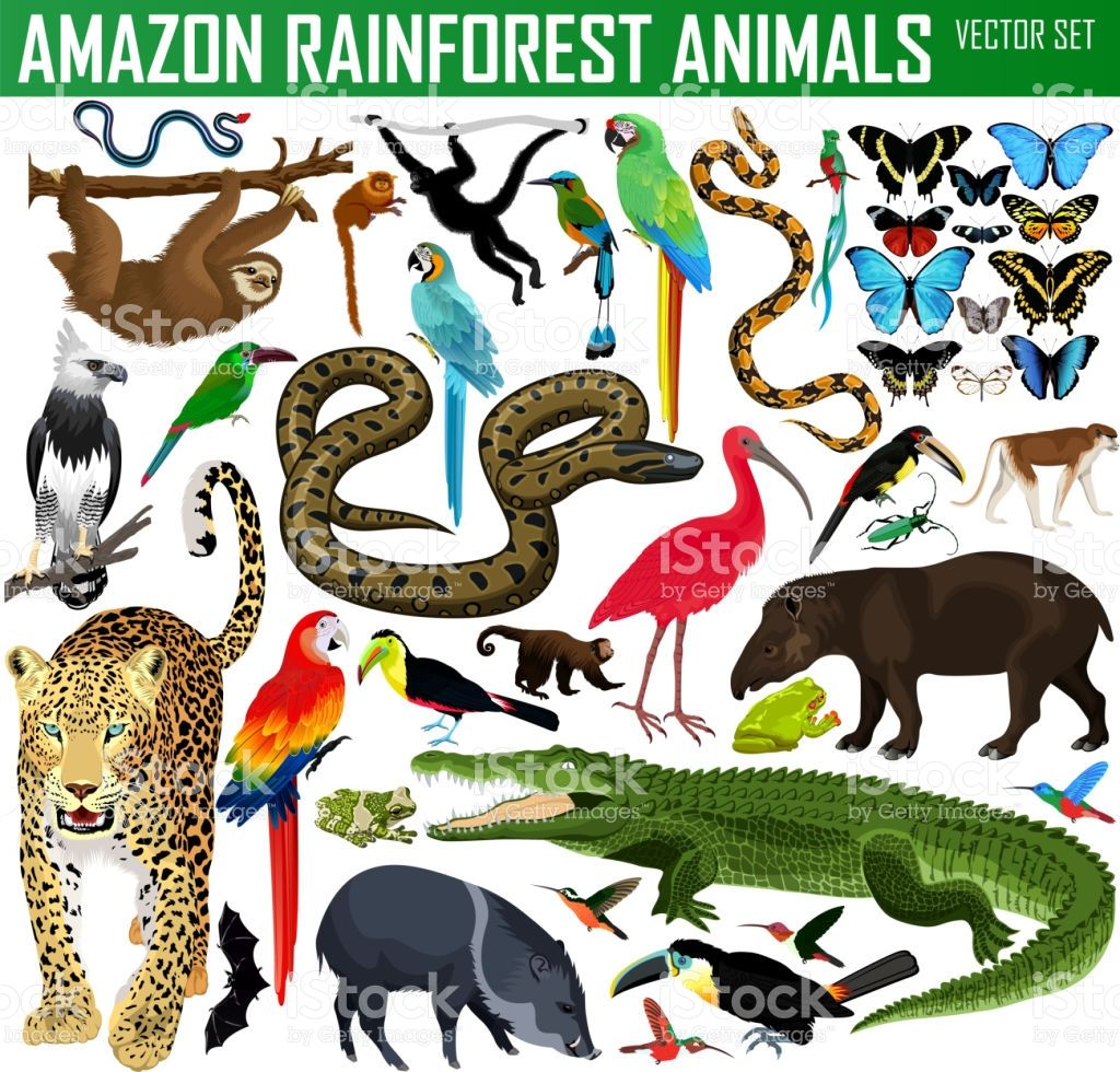 Big Set Of Vector Amazon Rainforest Jungle Animals Amazon Animals Amazon Rainforest Animals Rainforest Animals