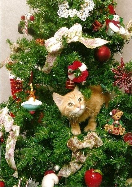 Best Ways To Spend The Holidays With Your Cat Pinterest Holiday