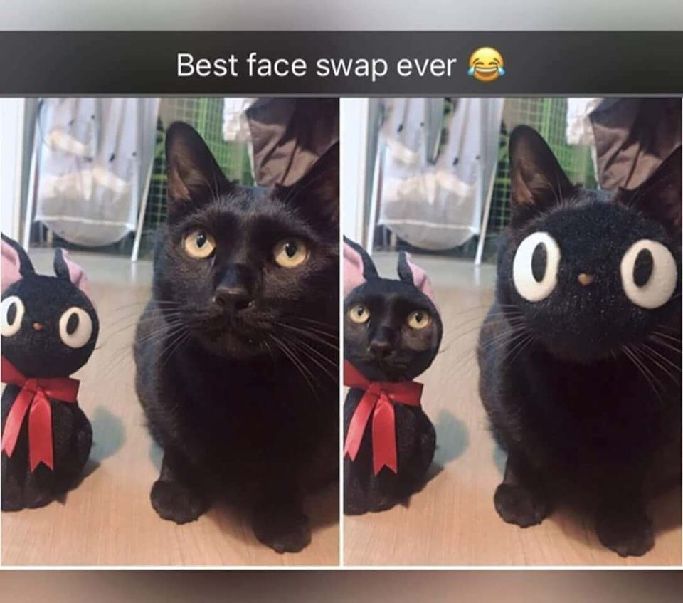 Collection Of Funny Cat Memes 2019 Cat Quotes Funny Funny Animal Memes Funny Animal Faces