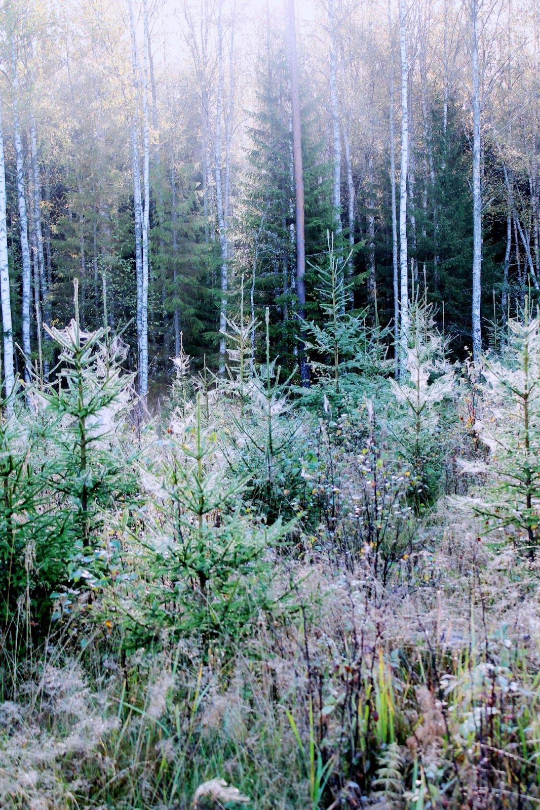 Magical forests in Finland | Alinan kotona blog