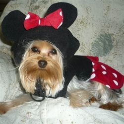adorable halloween costume for dogs