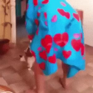 Cat and bathrobe - Viral Videos  #Animals #cat #crazy #funny #man #People
