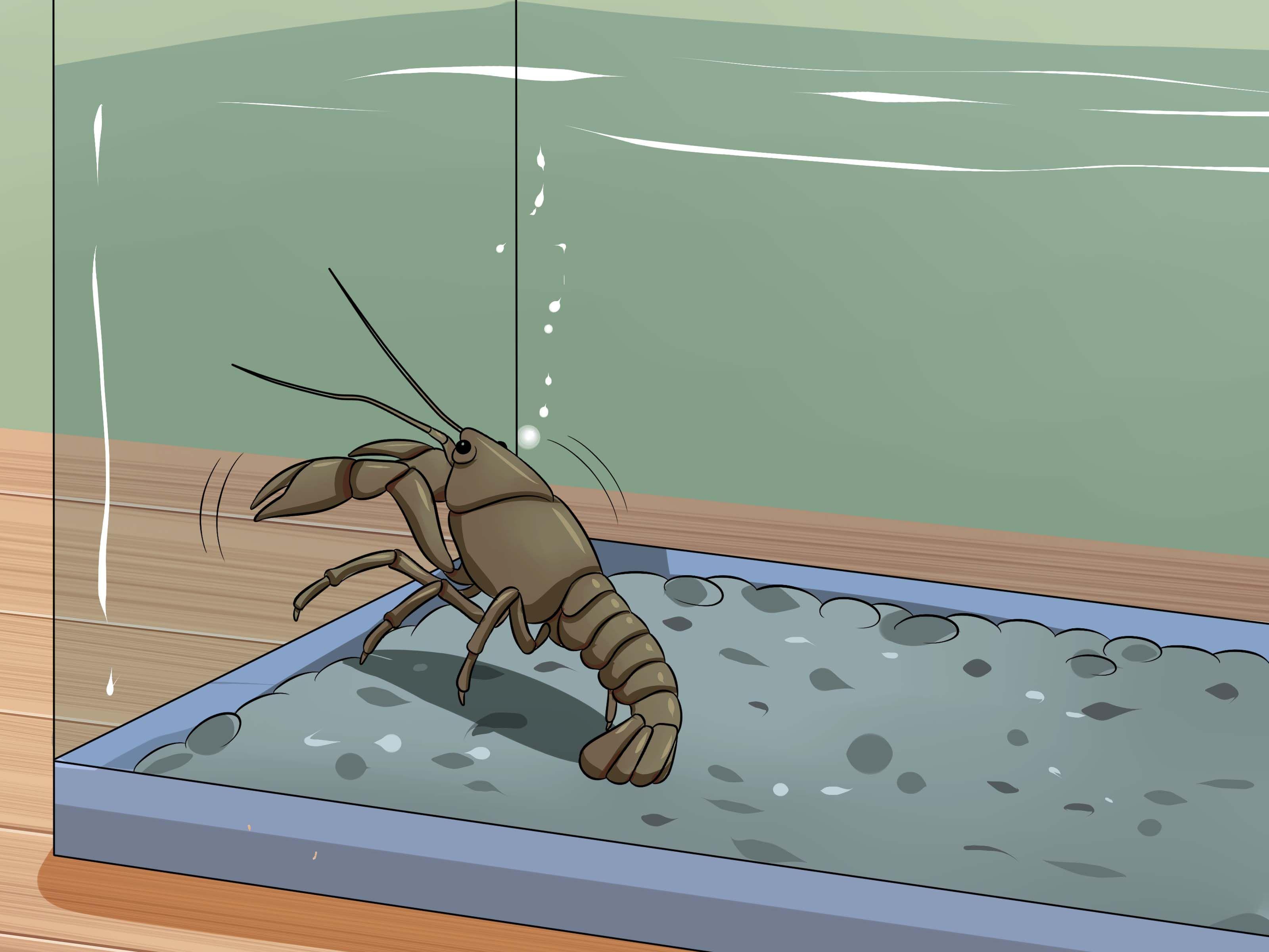 Take Care of Crayfish | Pet fish, Aquarium fish ...