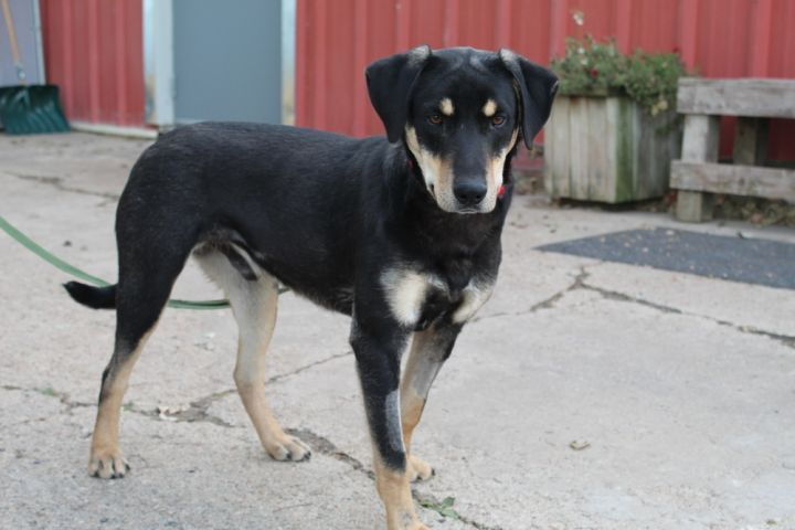 Adopt Blaze On Animal Projects Rottweiler Mix Pet Adoption