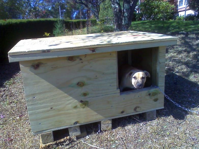 Build A Better Dog House Pitbulls Go Pitbull Dog Forums Cool
