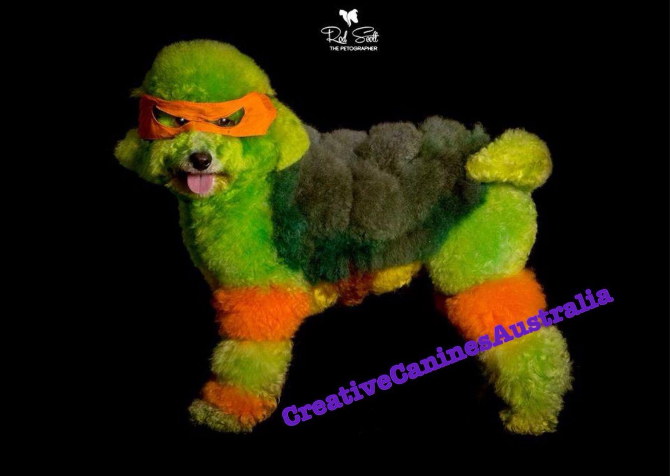 Michelangelo The Teenage Mutant Ninja Turtle Tmnt Poodle